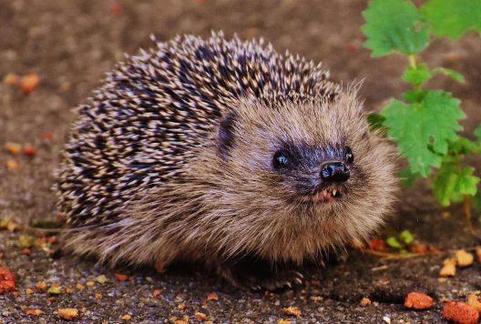 Wildlife Feeding Myths Uncovered